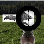 Тренировка охоты на кабана